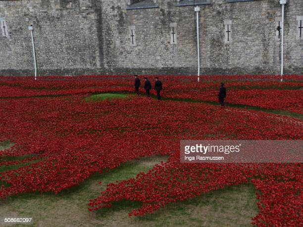 """Four soldiers waking by the evolving installation """"Bloodswept Lands and Seas of Red"""" marking the centenary of the outbreak of the First World War at..."""