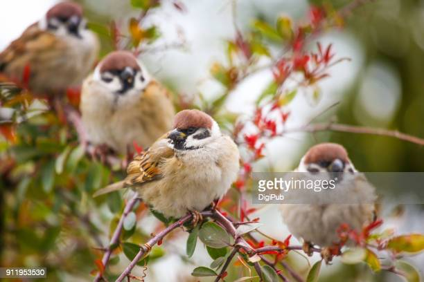 Four sparrows perching on branch in the tree