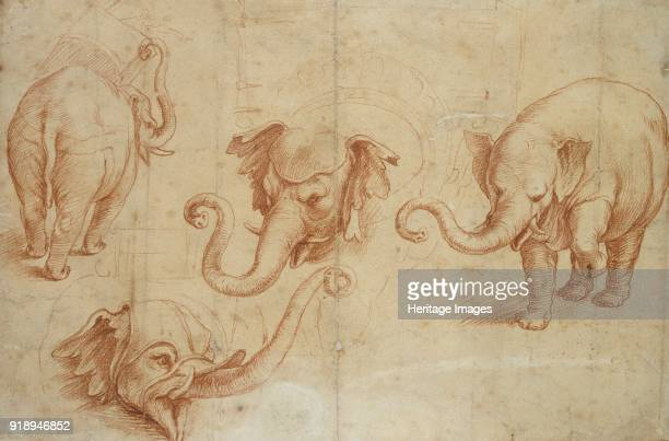 Four Studies of an Elephant early 16th century Dimensions height x width sheet 207 x 311 cm