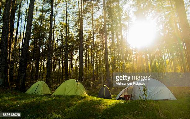 four tents in sunlit forest, russia - small group of objects stock pictures, royalty-free photos & images