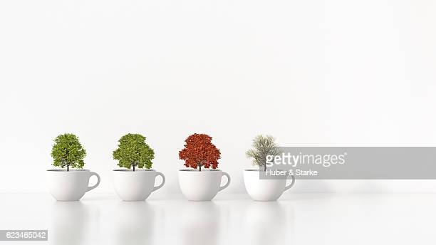 four trees in white cups