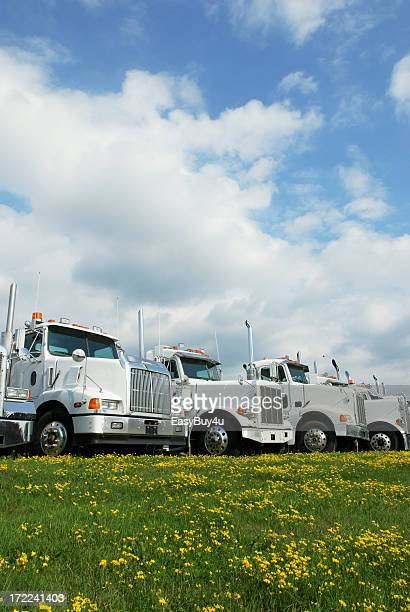 Four white trucks near green grass with yellow flowers