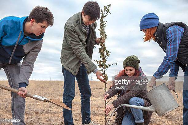 Four young men planting a tree