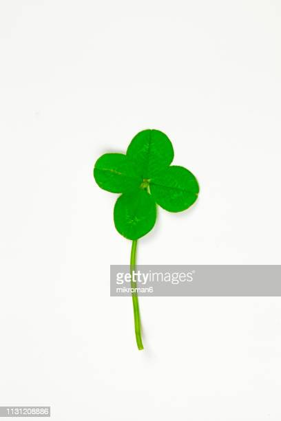 four-leaf clover. good luck - four leaf clover stock pictures, royalty-free photos & images