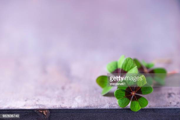 four-leaved clovers - luck stock pictures, royalty-free photos & images