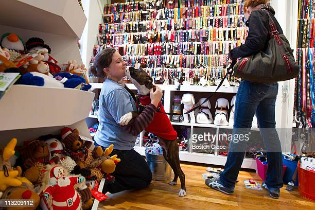 Fourmonthold boxer Otto excitedly greets store manager Rachel Andrews of Watertown while his owner Laura Putnam of Boston shops for collars From the...