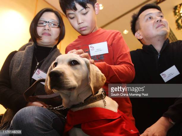 Fourmonthold labrador retriever 'Google' the first puppy to serve as a Guide Dog for the blind and visually impaired as part of a new initiative...