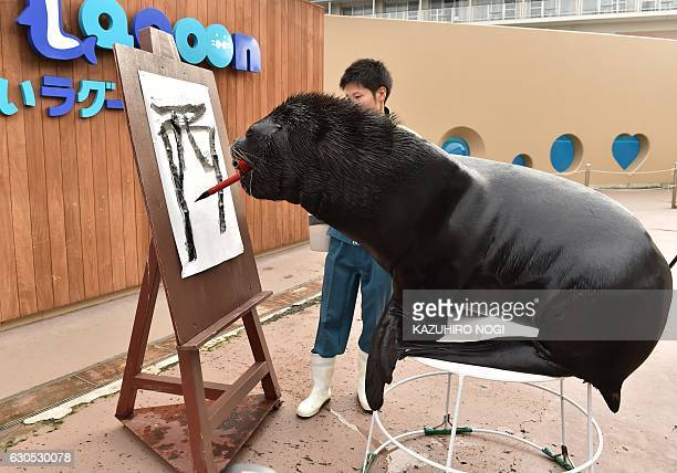 Fourteen yearold male sea lion 'Leo' attends a calligraphy training session to paint the character for 'Rooster' at the Hakkeijima Sea Paradise...