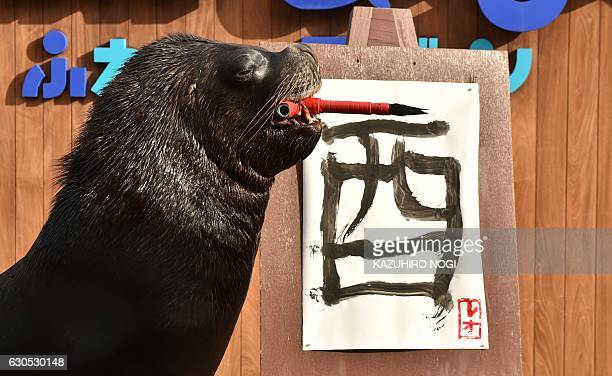 Fourteen yearold male sea lion 'Leo' poses during a calligraphy training session at the Hakkeijima Sea Paradise aquarium in Yokohama suburban Tokyo...