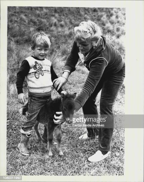 Fouryearold David Thom of Douglas Park gets a hand from Mum to climb aboard Minnie a tiny 45 cm Shetland pony born last SaturdayIt is rare for such a...