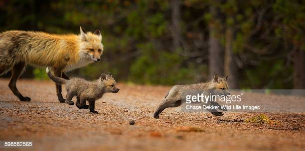 Fox Chase