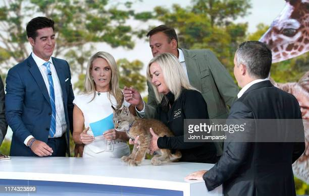 Fox cohosts of The Five Jesse Watters Dana Perino Tom Stalf from the zoo and Greg Gutfeld welcome Columbus Zoo for Animals Are Great Segment at Fox...