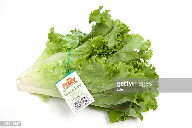 fox green leaf lettuce - leaf lettuce stock pictures, royalty-free photos & images
