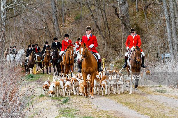 Fox Hunt -- Hounds, Horses and Riders