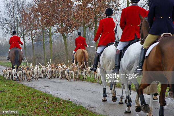 fox hunt # 1 - hunting stock pictures, royalty-free photos & images