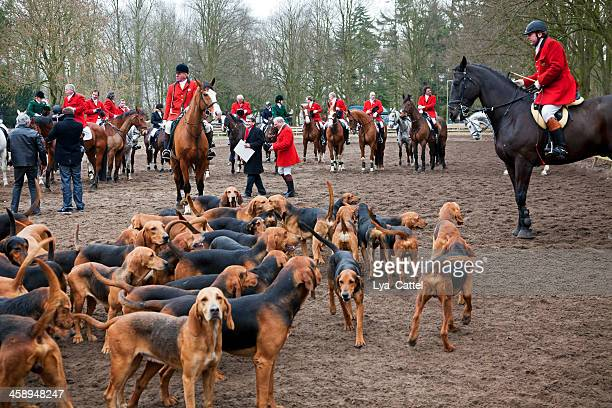 fox hunting # 2 xxxl - fox hunting stock pictures, royalty-free photos & images