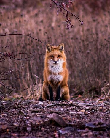 Fox 1011613654