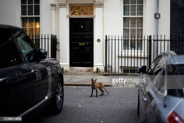 Fox stands outside the door to 11 Downing Street, the official residence of Britain's Chancellor of the Exchequer, in central London on November 16,...