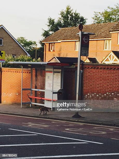 Fox Walking By Bus Stop Against Clear Sky