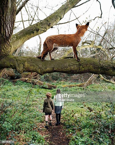Fox watching children walking in the woods