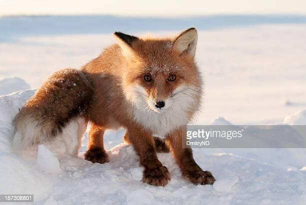 Foxy Look.
