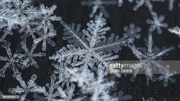 fragility... - snowflakes stock photos and pictures