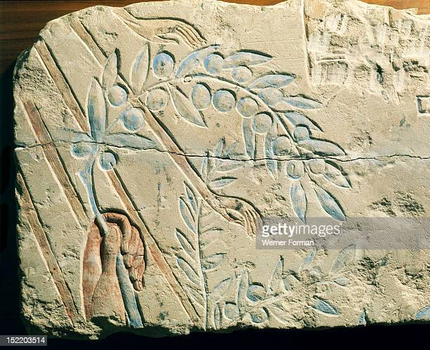 Fragment of a relief Olive branch held by King Akhenaten offering to the god Aten whose sun rays are depicted with hands to pick the proffered fruit...