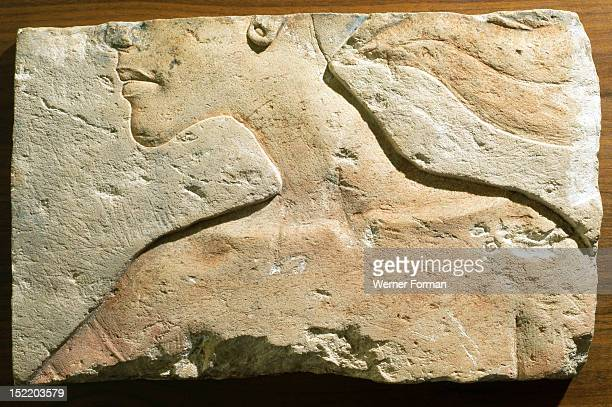 A fragment of a relief Part of a head and shoulders in typical Amarna style Egypt Ancient Egyptian 18th dynasty c 1352 1336 BC Amarna period