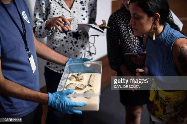 Fragments of the oldest human fossil found within today's Brazilian borders known as 'Luzia' which were found among the rubble of Rio de Janeiro's...