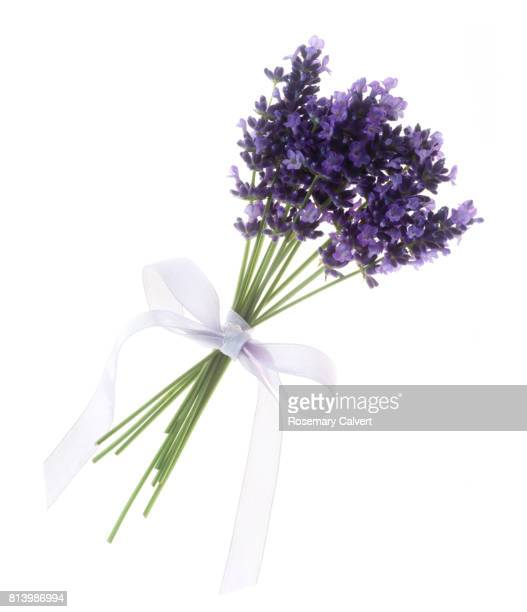 Fragrant lavender flowers tied with purple ribbon, on white.