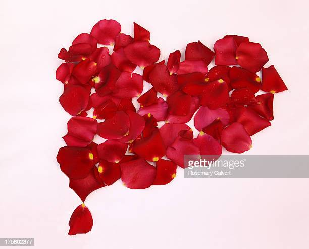 Fragrant red rose petals in shape of heart