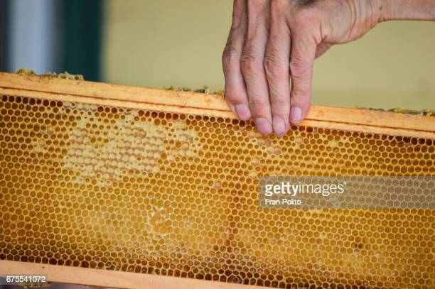 A frame from a Langstroth bee hive.
