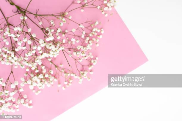 frame made of small white flowers on pastel pink background. happy women's day, wedding, mother's day, easter, valentine's day. flat lay, top view, copy space - easter flowers stock pictures, royalty-free photos & images
