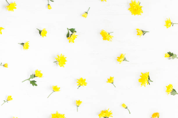 Free yellow flower white background images pictures and royalty frame made of yellow flowers on white background mightylinksfo