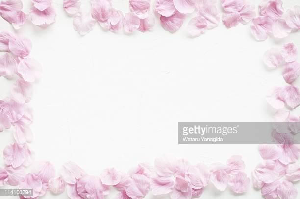 Frame of cherry blossom petals