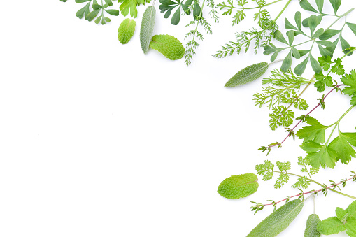 frame of herbal leaves in white background 622318420