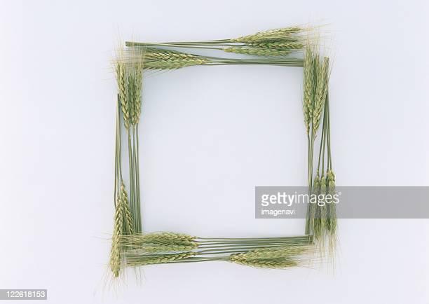 Frame of Plant
