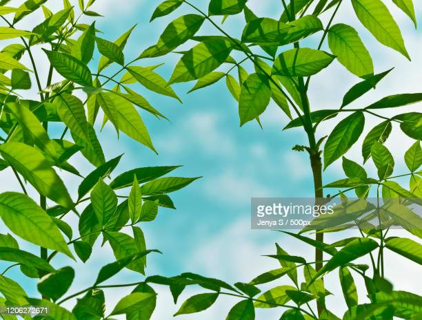frame out of green leaves - out of frame stock pictures, royalty-free photos & images