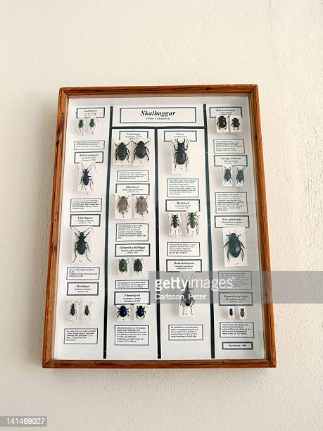 framed beetle collection on wall - zoologia foto e immagini stock