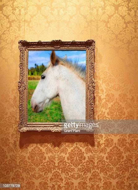 framed photograph of white horse.