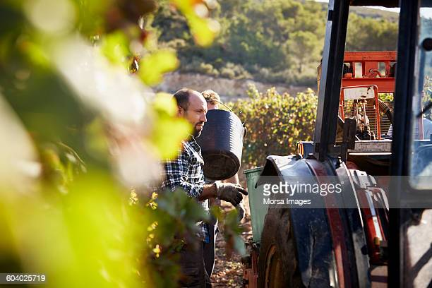 Framer standing by tractor while harvesting grapes
