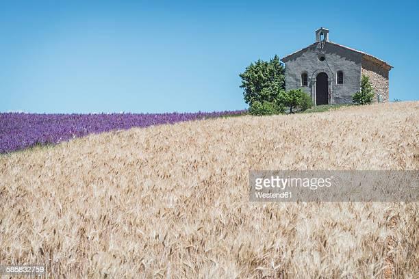 France, Alpes-de-Haute-Provence, Entrevennes, Chapel Notre-Dame-de-la-Sante, corn and lavender field