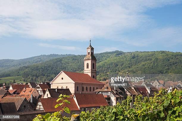 france, alsace, alsatian wine route, haut-rhin, riquewihr, vineyard, ballons des vosges nature park - haut rhin stock pictures, royalty-free photos & images