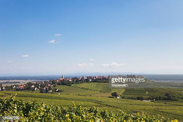 france, alsace, haut-rhin, alsatian wine route, hunawihr, view of vineyard and village in late summer - haut rhin stock pictures, royalty-free photos & images
