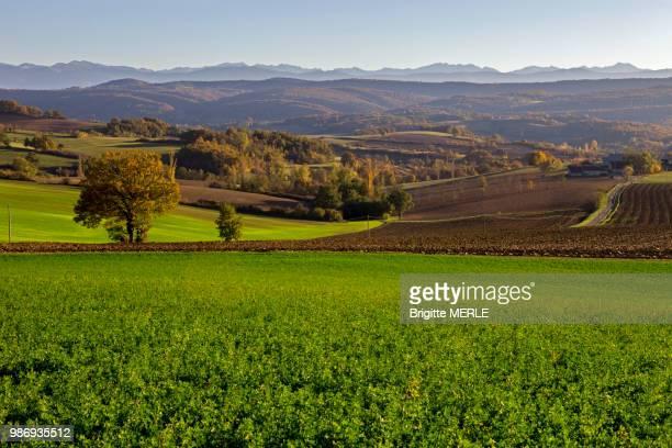 france, ariege, autumn landscape, pyrenees, carla bayle region. - midi pyrénées stock photos and pictures
