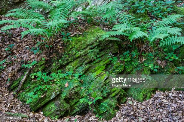 france, ariege,wood of anglade to the old anglade mines in salau - アリエージュ ストックフォトと画像