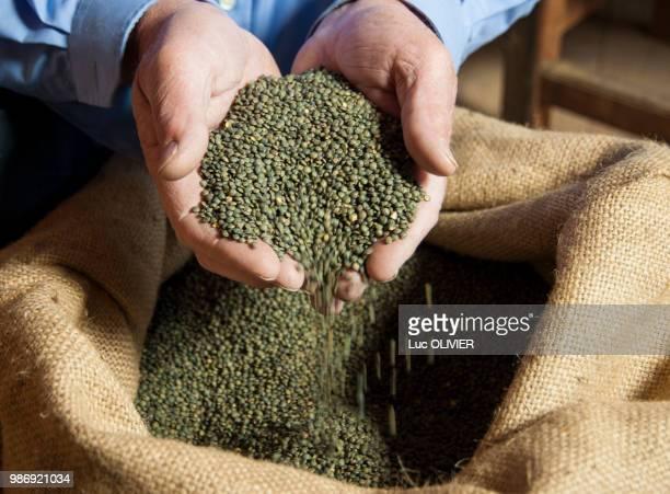 france, auvergne-rhones-alpes, haute-loire, le puy-en-velay, le puy green lentil - ルピュイ ストックフォトと画像