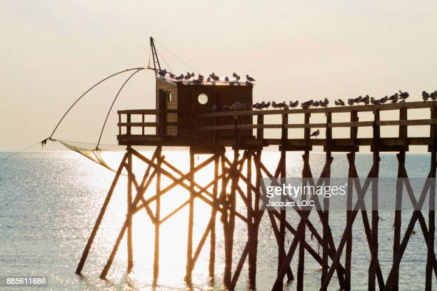 France, Bourgneuf Baie, Les Moutiers-en-Retz, gulls perched on a fishery.