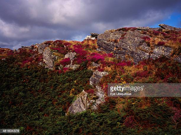 France Bretagne Cotes d Armor Monts d Arree Rocky outcrop with bracken bell heather and gorse