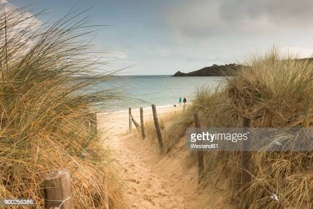 France, Bretagne, view to the sea with walkers on the beach and beach dunes in the foreground